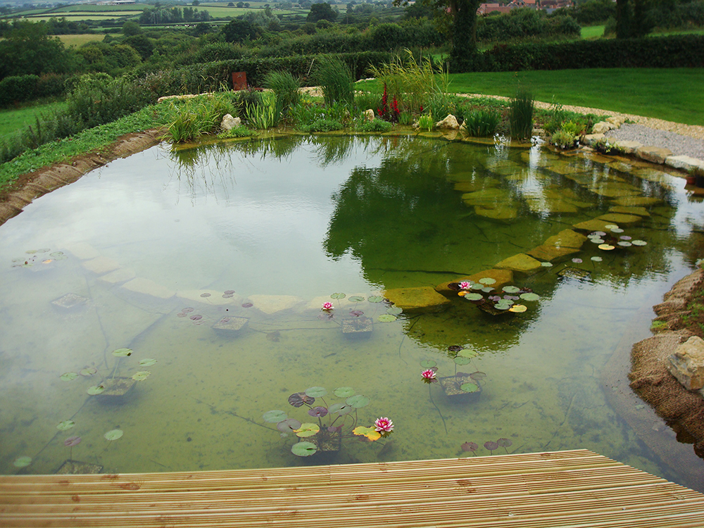 natural swimming pools warwickshire swimming pond design