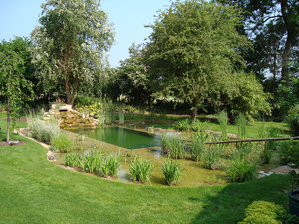 Natural swimming pools warwickshire swimming pond design for Natural garden designs